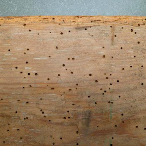 traitement du bois HM1